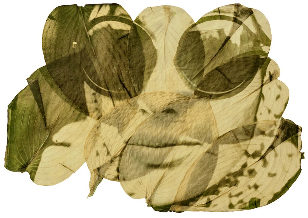 A green and yellow image of a woman wearing sunglasses printed on several leaves.