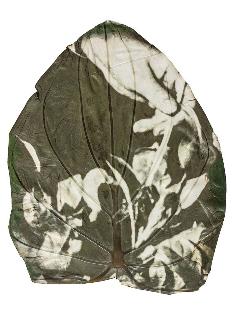 A green and white image of a hand picking a plant printed on a large leaf.
