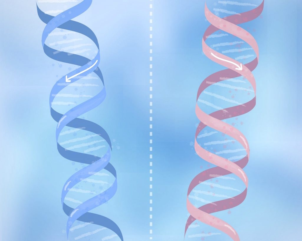 Illustrations to help spot a badly-drawn scientific icons. These are mirror images and can not be converted one into the other by rotation. The normal form of DNA is a right-handed helix (left figure).