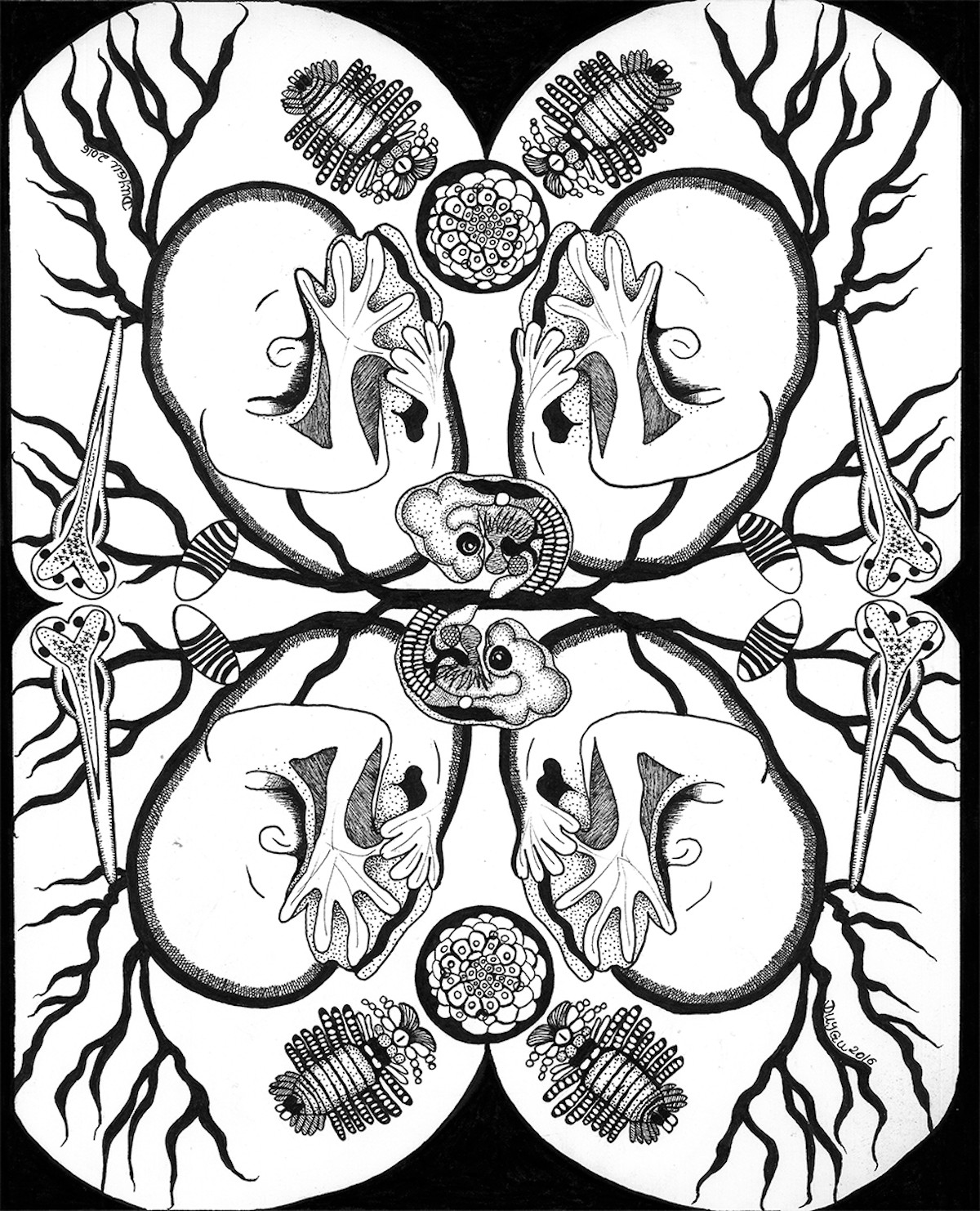 Black and white illustration of developing embryos and fetuses. The image is reflected across vertical and horizontal axes.