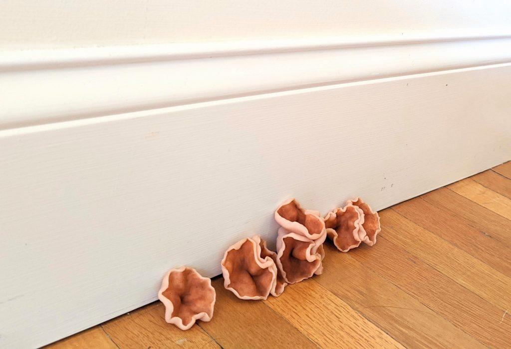 Orange/tan mushrooms growing between a wood floor and white wall