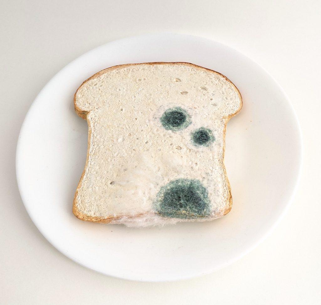 Moldy slice of white bread