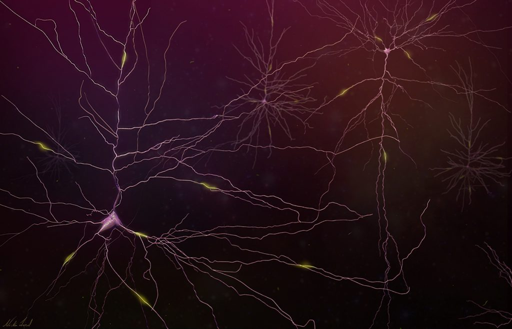 Thin, branching lines that radiate out from central connecting points, which are the neuron bodies.