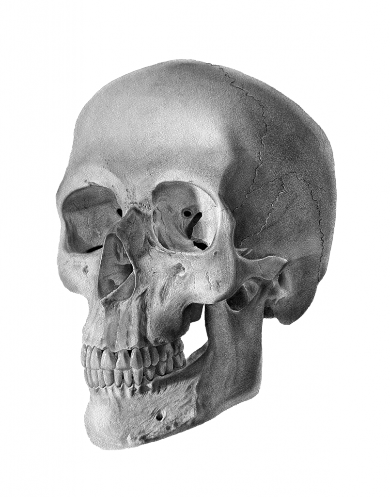 Black and white illustration of a human skull