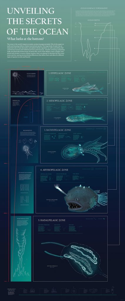 Infographic of sea creatures found at different ocean depths
