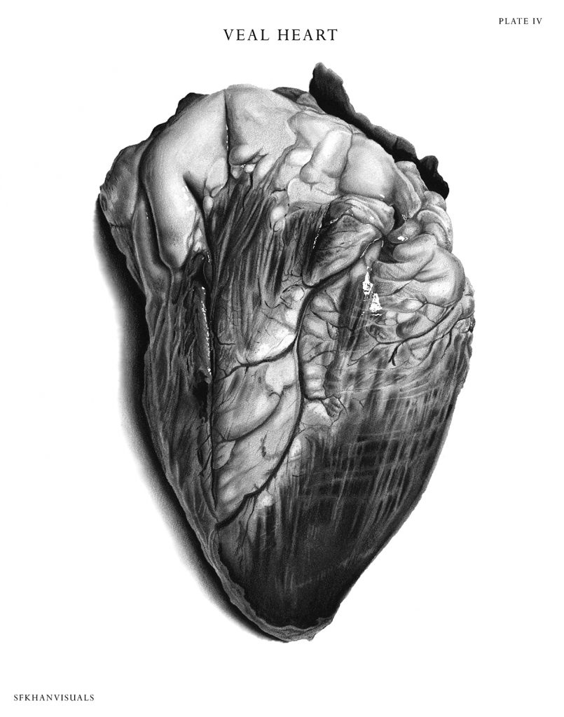 Black and white illustration of a veal heart