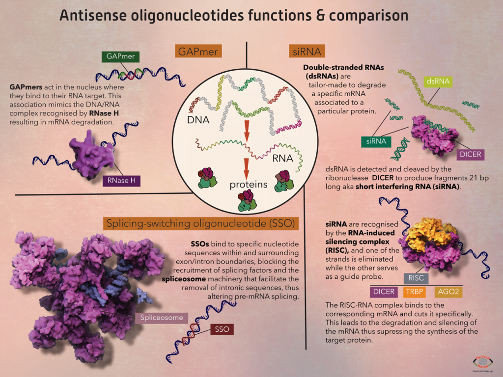 Pictorial Representation of Antisense oligonucleotides functions & comparison describing various actions of cells  (2020) by Gloria Fuentes