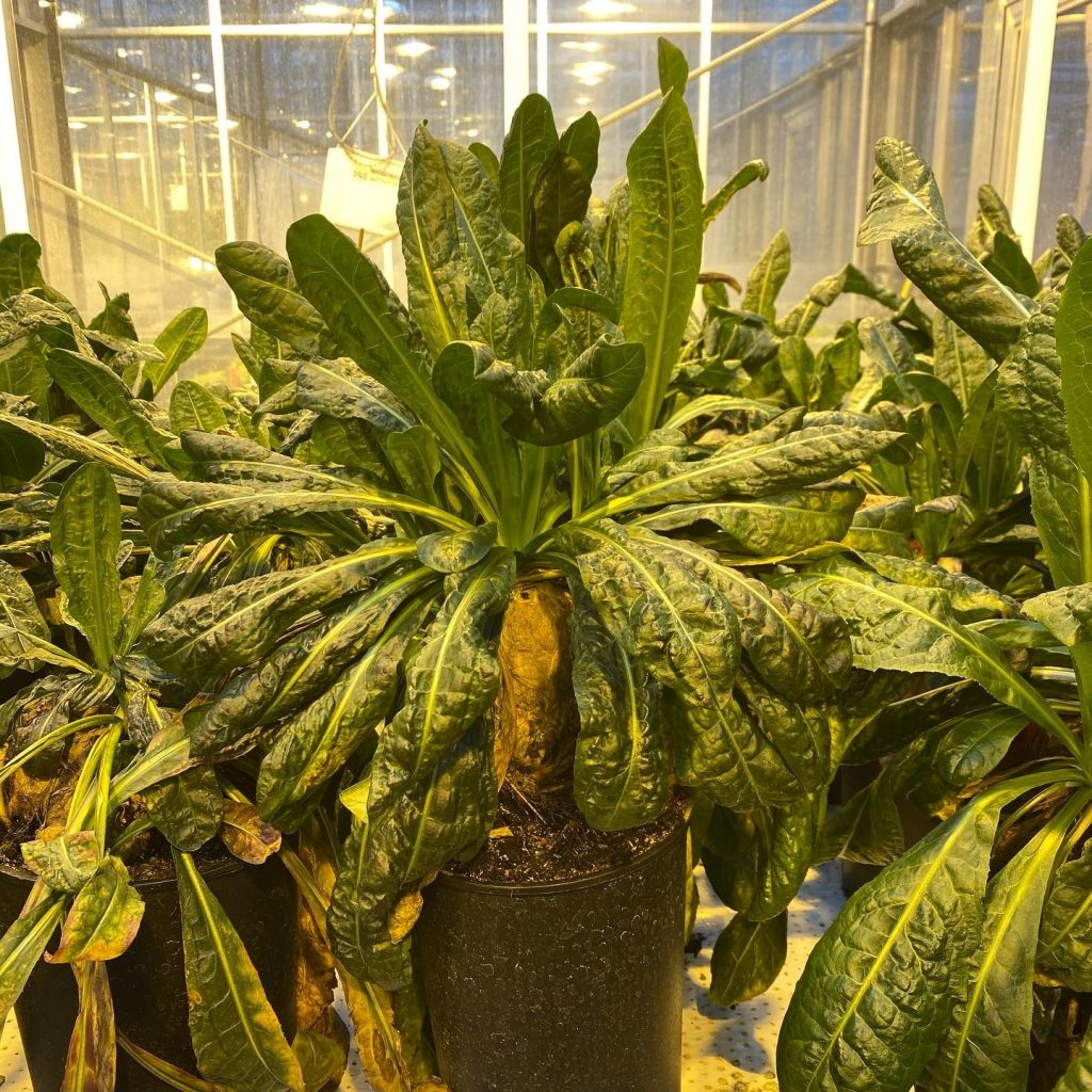 Several large, leafy plants in a glass-walled room.