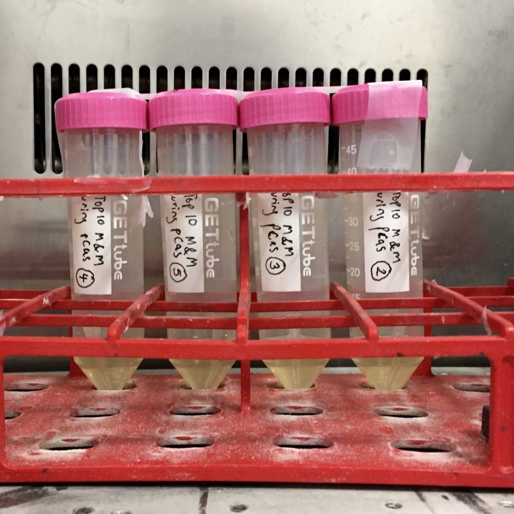 Four plastic conical tubes holding bacterial cultures, sitting in a red tube rack.