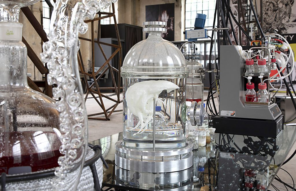 An organic white structure encased in glass, surrounded by scientific equipment.