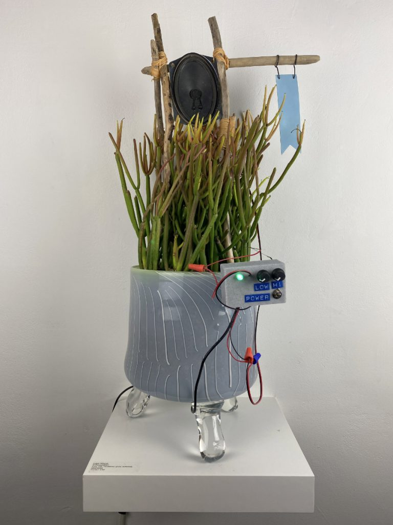 A firesticks plant in a grey glass planter, connected to a wooden frame, an electronic device, and a speaker