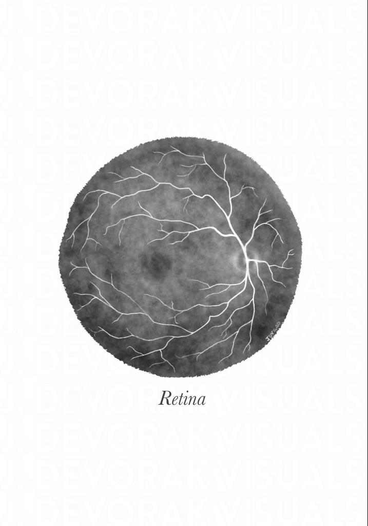 Black and white illustration of a retina.