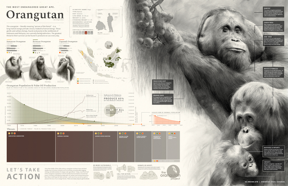 Illustrations of orangutans with information about their habitat and biology, and a chart showing a correlation between an increase in palm oil production and a decline in the orangutan population.