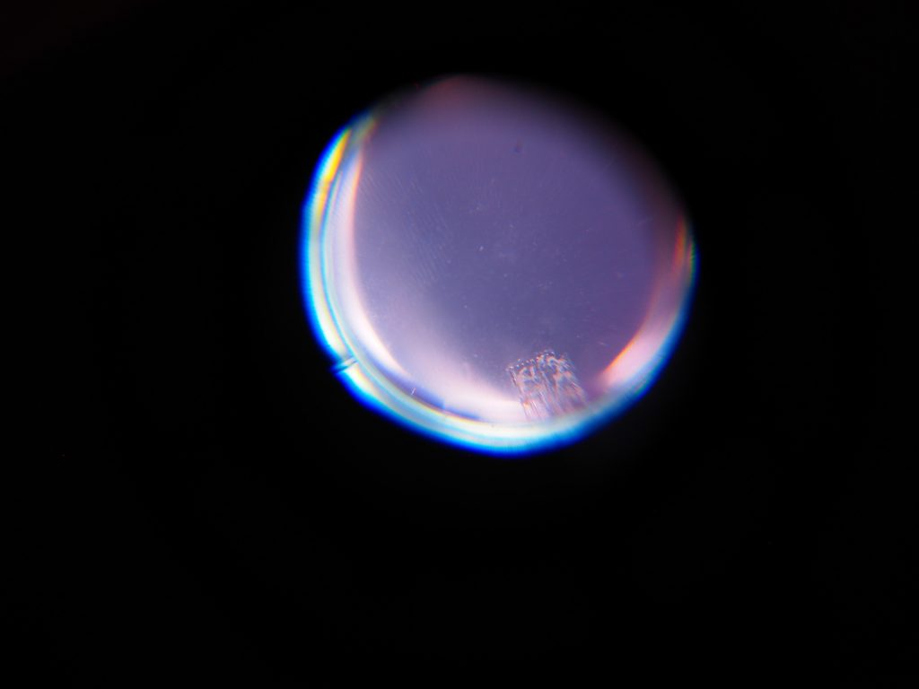 A purple and blue circle on a black background, corresponding to the viewing window in Bricolage where the heart muscle cells can be seen.
