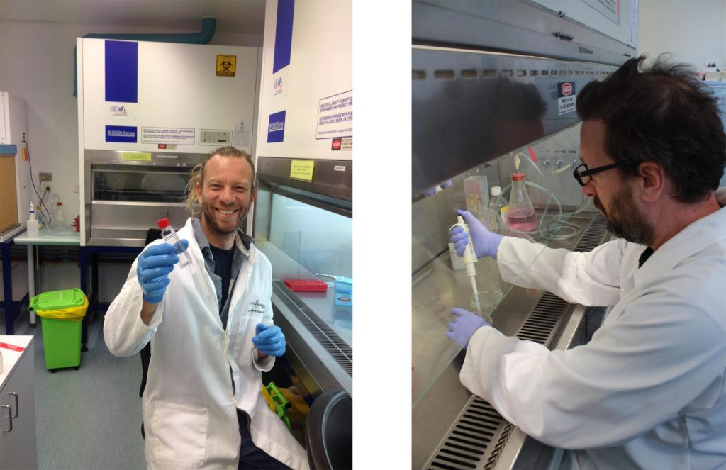 Two men working at tissue culture hoods in a lab setting.