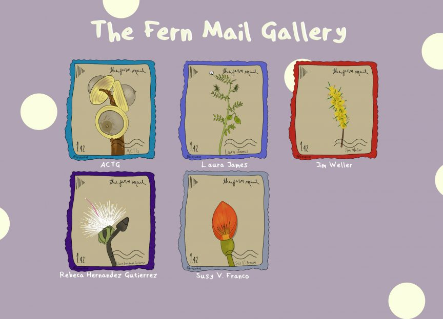 alt text: The Fern Mail Gallery by Sarita Muñoz-Gómez. On a lilac-coloured and sparsely polka-dotted background, five illustrated stamps are laid out in a 3 x 2 grid. From top left to bottom right: Lithocarpus in a teal frame for ACTG, Lens culinaris in a light purple frame for Laura James, Acacia pycnantha in a red frame for Jim Weller, Pseudobombax ellipticum in a dark purple frame for Rebecca Hernandez Gutierrez, and Erythrina edulis in a grey frame for Susy V. Franco.