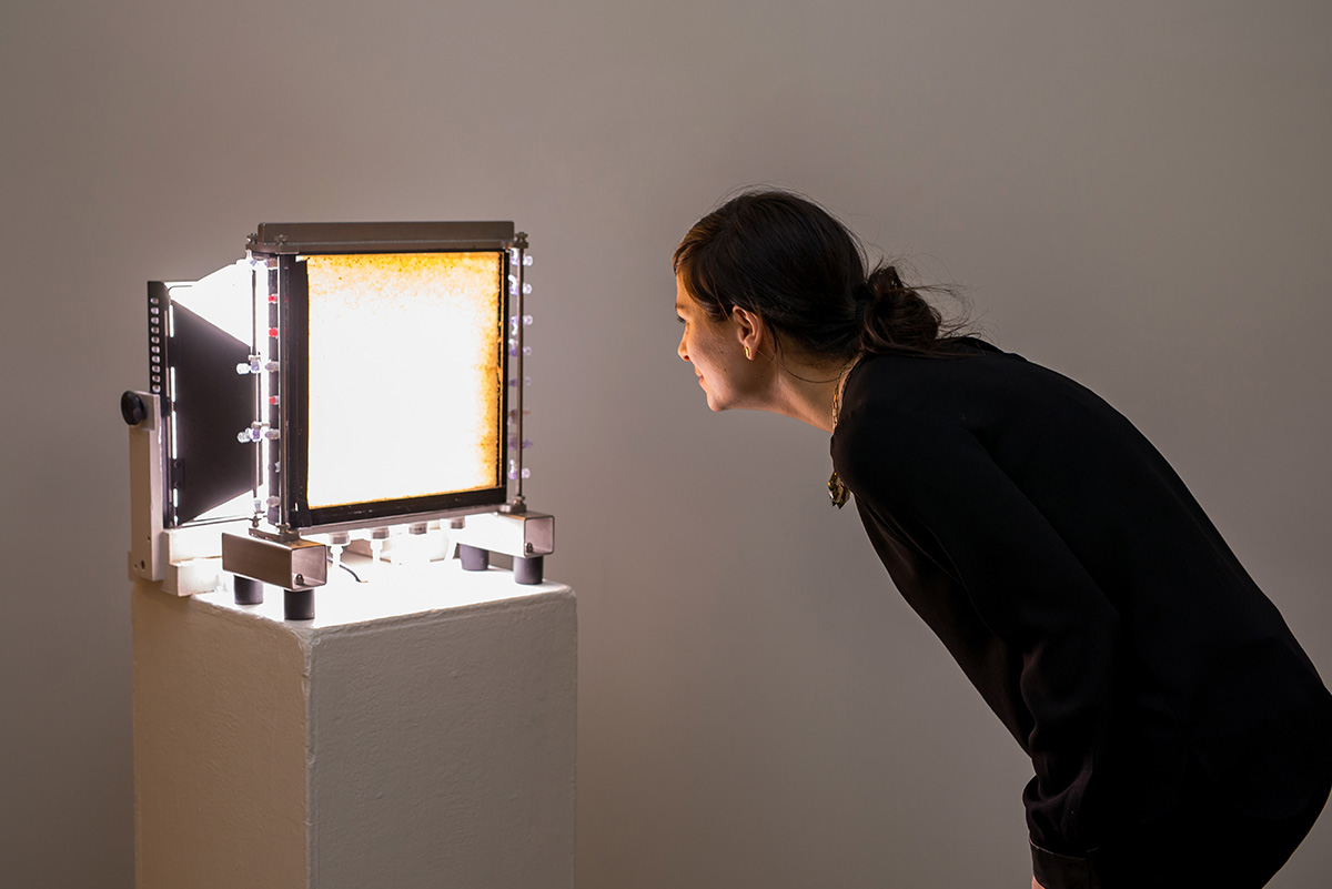 Photo of person looking at an object on a plinth